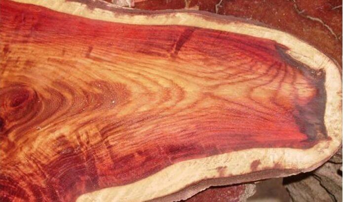 Gỗ thông đỏ và cách nhận biết gỗ thông đỏ