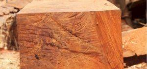 【Tư vấn】Chi tiết gỗ lim là gì và thuộc nhóm mấy?