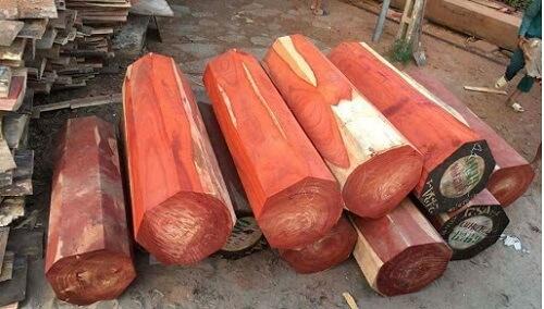 Các loại gỗ không bị mối mọt khác