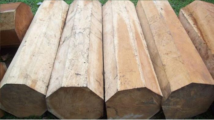 những loại gỗ không bị mối mọt