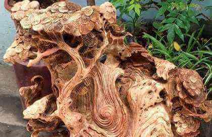 Nu gỗ gì đẹp nhất hiện nay?